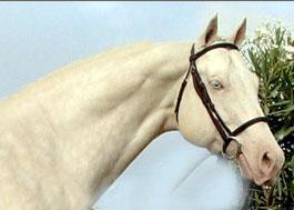 http://www.inseparabile.com/images/albinoscheda.jpg