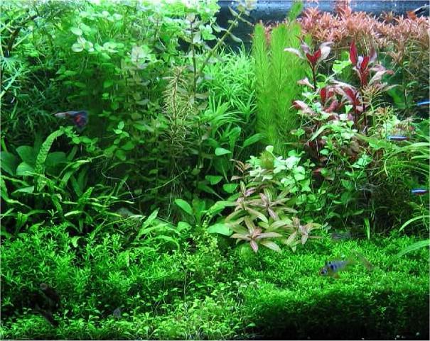 piante da acquario coltivazione e cure piante da acquario