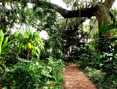 Piante da giardino o da terrazza - Piante da giardino profumate ...