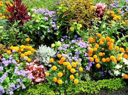 Piante e fiori le specie le cure i vivai video le schede for Piante e alberi da giardino