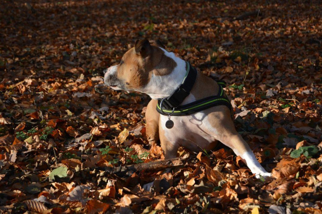 divertirsi nelle foglie