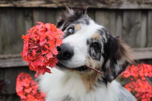 vuoi un fiore