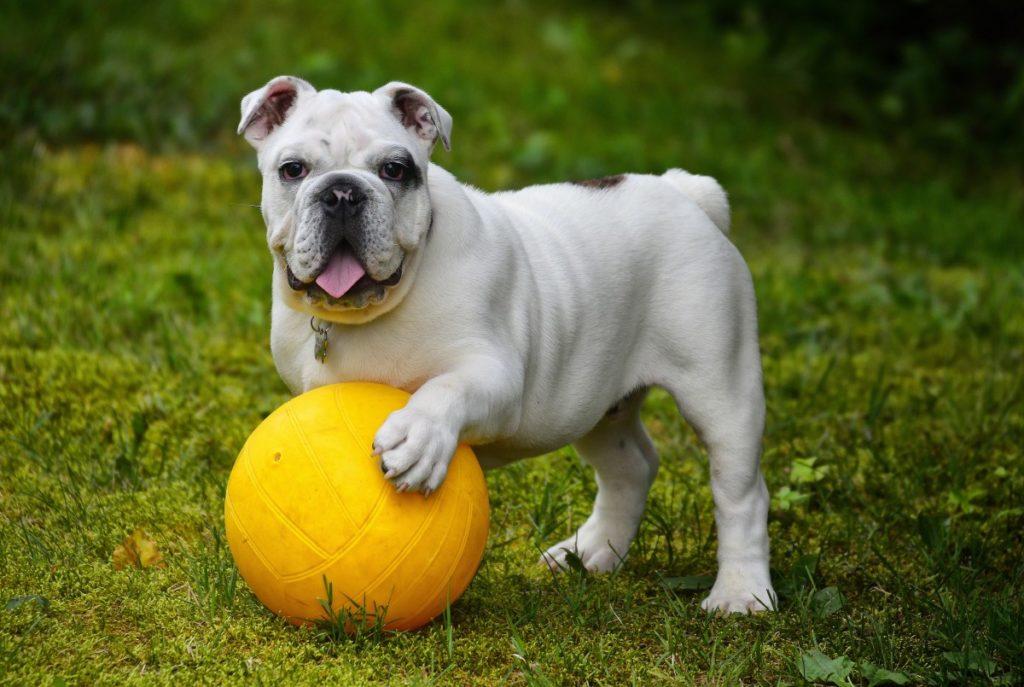 giochiamo a palla