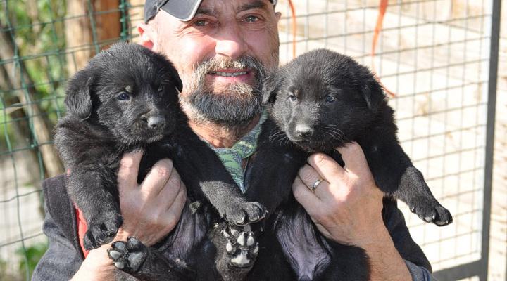Pastore italiano cucciolini