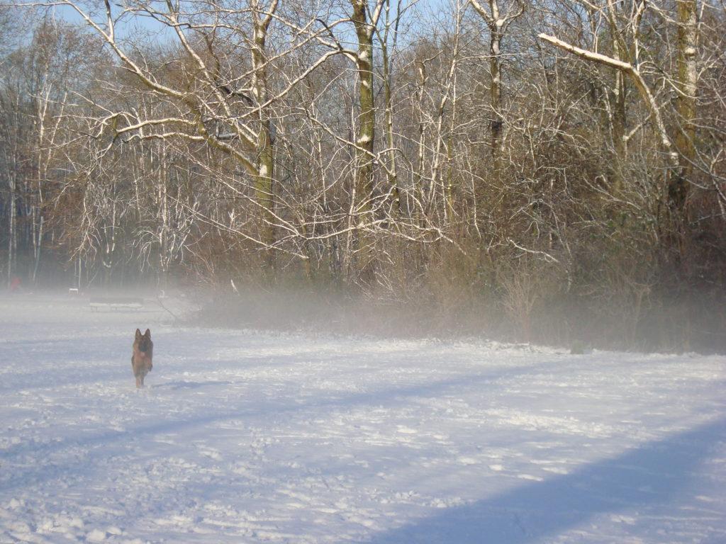 nlla nebbia