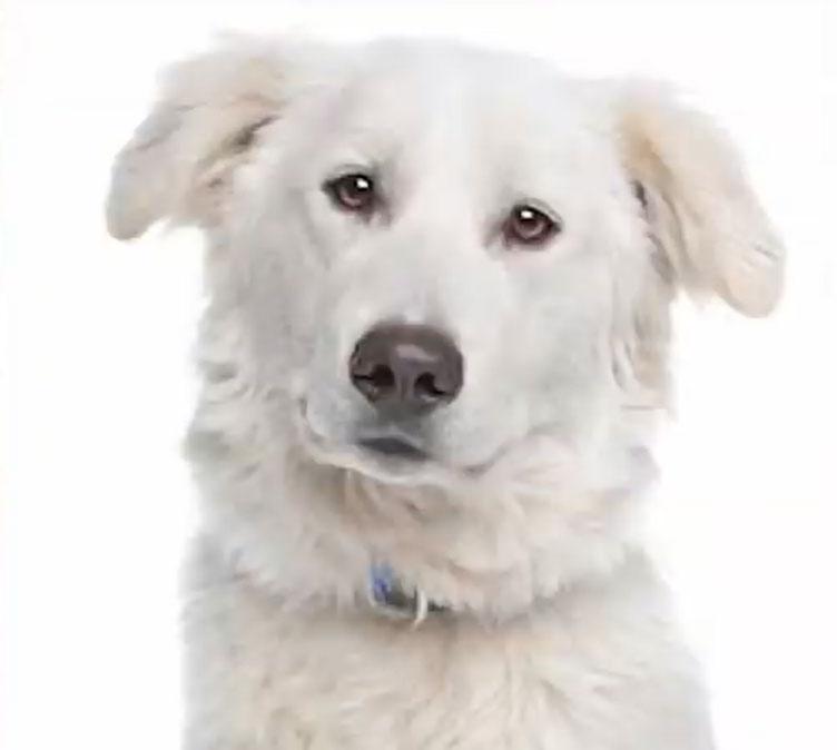 cane dell'itlas