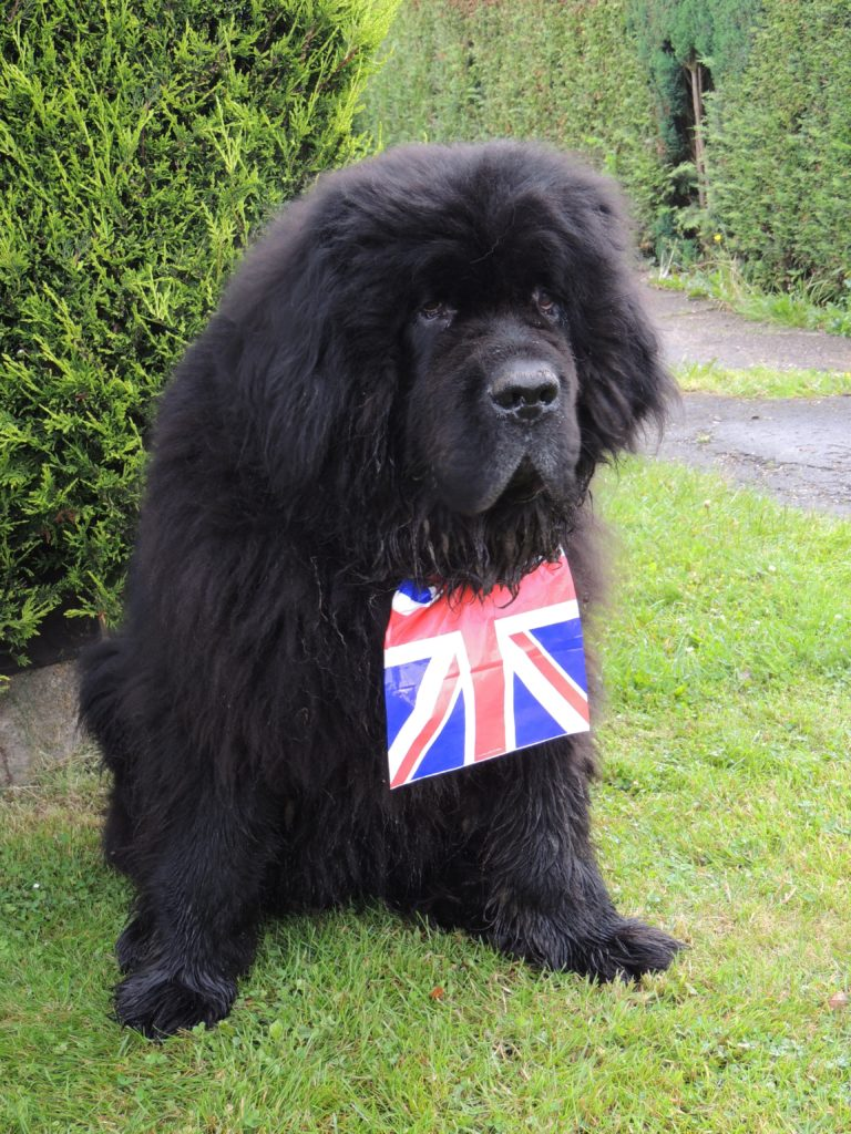 terranova con bandiera inglese